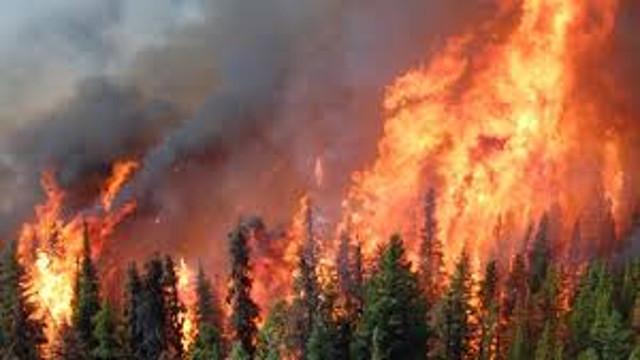 Hektary lasów poszły z dymem