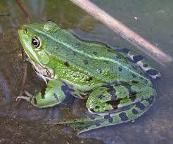 Dom dla żab, kasa dla rolników