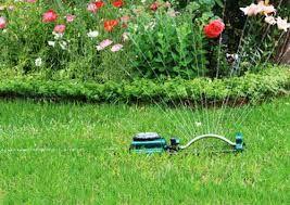 Nie wolno im podlewać ogródków! Dlaczego?