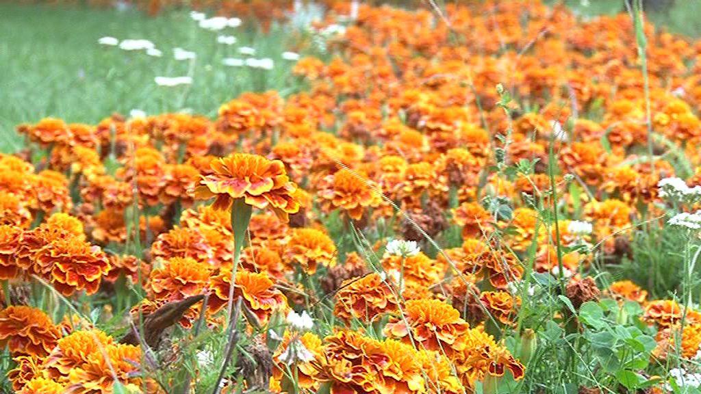 Czy w Parku Łokietka będzie łąka dla owadów?